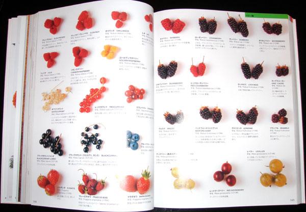 世界の食材図鑑 300-301ページ サラミ